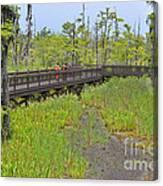 The Everglades Of Texas Canvas Print