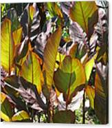 The Exotic Canvas Print