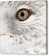 The Eye Of The Gull Canvas Print