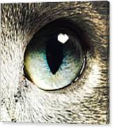 The Eye Of The Russian Blue Canvas Print