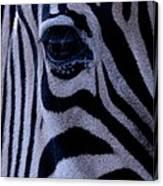 The Eye Of The Zebra Canvas Print