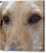 The Eyes Say It All Canvas Print