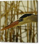 The Face Of A Heron Canvas Print