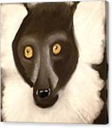The Face Of A Lemur Canvas Print
