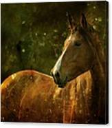 The Fairytale Horse Canvas Print