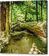 The Fallen Collection 10 Canvas Print