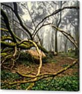 The Fallen Tree II Canvas Print