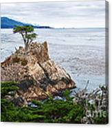 The Famous Lone Cypress Tree At Pebble Beach In Monterey California Canvas Print