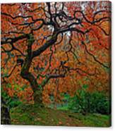 The Famous Tree At Portland Japanese Garden Canvas Print
