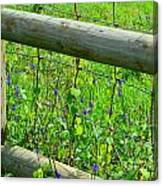 The Fence At The Meadow Canvas Print