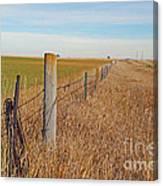 The Fence Row Canvas Print