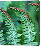 The Fern Canvas Print