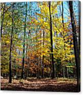 The Final Days Of Autumn Color Canvas Print
