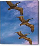 The Flight Of The Pelican Canvas Print