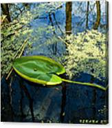 The Floating Leaf Of A Water Lily Canvas Print