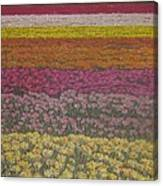 The Flower Field Canvas Print