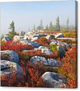 The Fog Clears At Dolly Sods Canvas Print