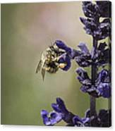 The Foraging Bee II Canvas Print