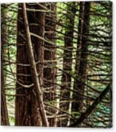 The Forest Combed By The Wind In The Lake Canvas Print