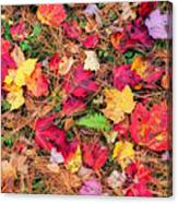 The Forest Floor Canvas Print