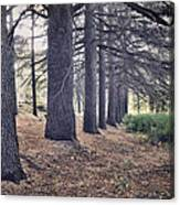 The Forest Of A Thousand Stories Canvas Print