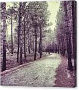 The Forest Road Retro Canvas Print