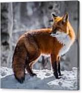 The Fox 1 Canvas Print