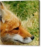 The Fox 7 Canvas Print