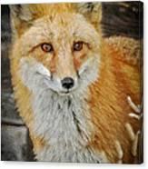 The Fox 8 Canvas Print