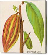 The Fruit Of The Cocoa (or  Chocolate) Canvas Print
