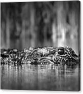 The Gator Canvas Print