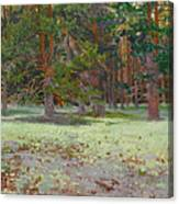The Glade Covered With A Moss Canvas Print