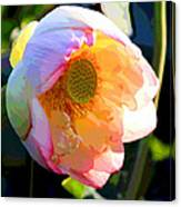 The Glow of the Lotus Canvas Print