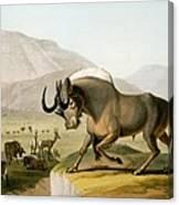 The Gnoo, 1804 Canvas Print