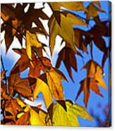 The Golden Hues Of Autumn  Canvas Print