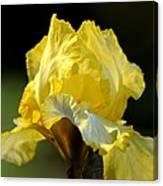 The Golden Iris Canvas Print