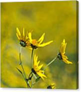 The Golden Wildflowers Canvas Print