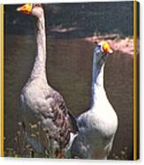 The Goose And The Gander Canvas Print