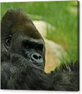 The Gorilla 2 Canvas Print