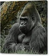 The Gorilla 3 Canvas Print
