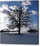 The Grand Tree Season Winter Canvas Print