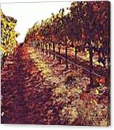 The Grapes Of The Wine Country Canvas Print