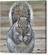 The Gray Squirrel Canvas Print