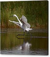 The Great Egret Canvas Print
