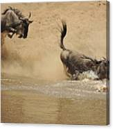 The Great Migration Wildebeest Crossing Canvas Print
