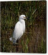 The Great White Heron Canvas Print