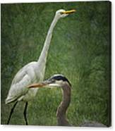 The Greats - Birds That Is... Canvas Print