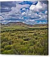 The Green Desert Canvas Print