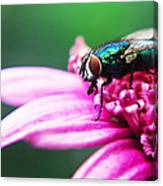 The Green Fly Canvas Print
