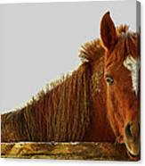 The Greeter Canvas Print
